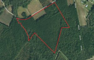 41 Acres of Farm and Timber Land For Sale in Robeson County NC!