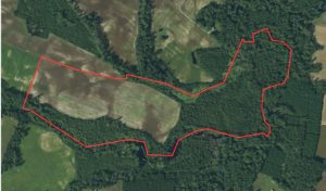 91.3 ac +/- of Farmland/Timberland For Sale in Craven County NC!